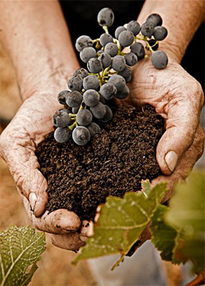 From soil to grape to wine